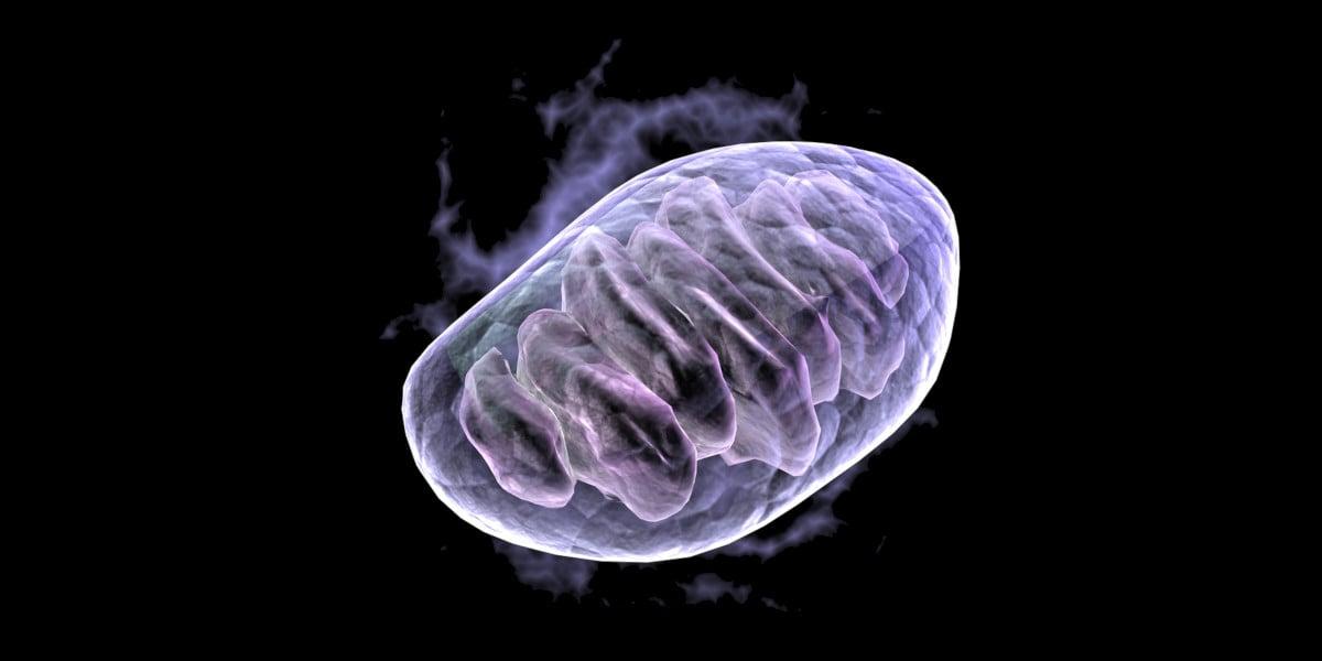 černo-modrý obrázek - AMPK spouští produkci nových mitochondrií