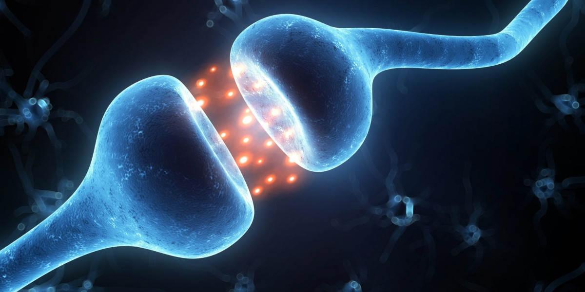 hořčík pomáhá s učením a funkcí mozku - nervová synapse ilustrační obr.